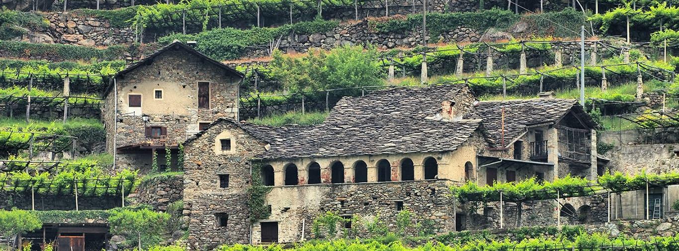 Aostatal vineyard