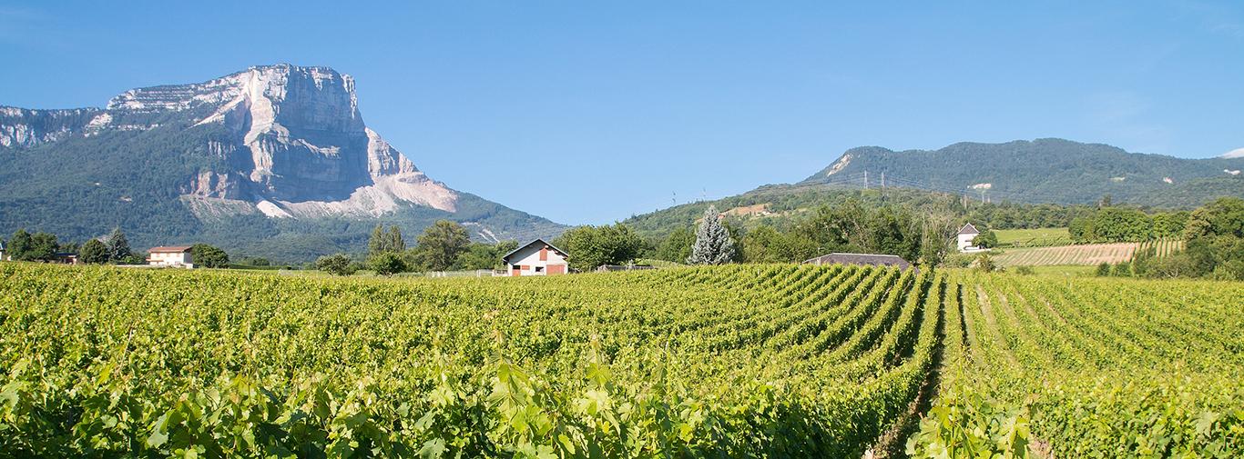 Vignobles de Savoie à Apremont