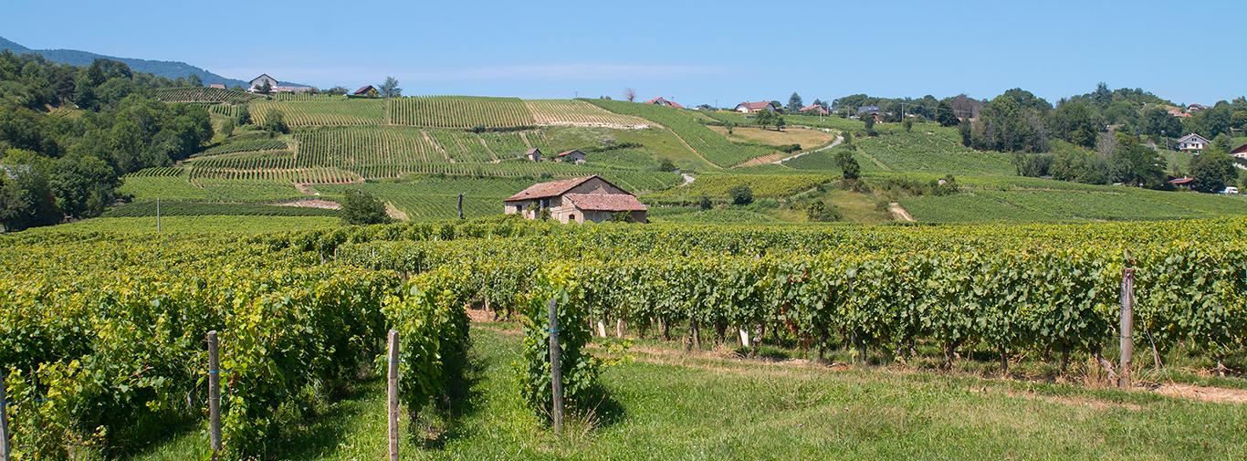 Vignobles de Savoie, Les Marches, France