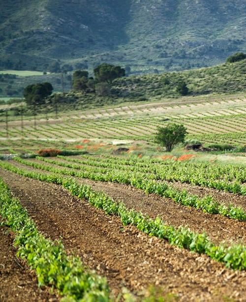Southeastern Spain