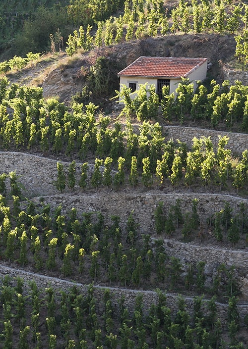 Northern Rhône Valley